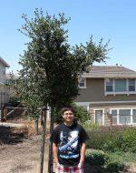 2013-07-21 - Nick's Tree