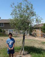 2013-07-21 - Tyler's Tree