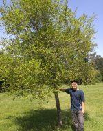 2017-April-14 - Tyler's Tree in Hayward