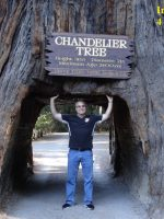 2015 10 03e-Chandelier Tree Tunnel